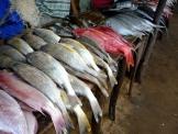 モザン魚市場2