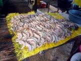 モザン魚市場3