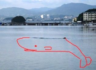 内ノ浦湾マッコウクジラ想像図。