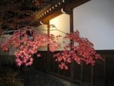 京都の紅葉 永観堂