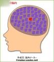 愛犬の脳内
