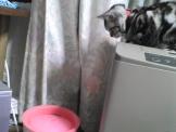 ペットの循環式水飲み器を見つめる猫