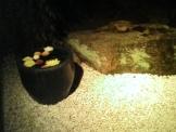 豆ちゃの庭