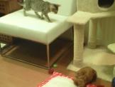 イオンモールKYOTOのペットショップ(ネコと犬)