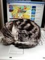 PCの上で寝る猫