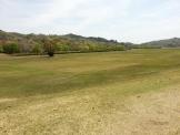 希望が丘の芝生