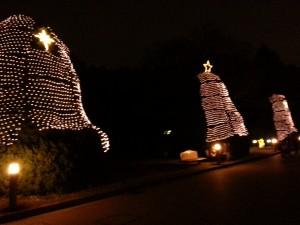 20131222_京都府立植物園のイルミネーション木