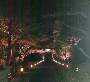 20131223_嵐山花灯路の二尊院