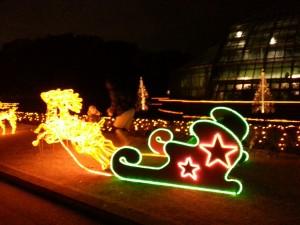 20131222_京都府立植物園のイルミネーションソリ