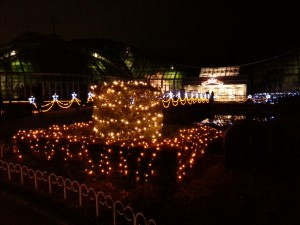 20131222_京都府立植物園のイルミネーション5
