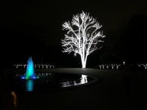 20131222_京都府立植物園のイルミネーション北門入口からの木と噴水