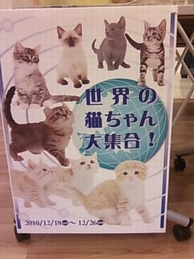 イオンモールKYOTOペットプラス世界の猫ちゃん大集合!