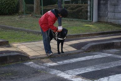 関西盲導犬協会の盲導犬のたまごの実演