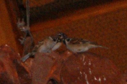 USJジュラシックパークレストラン恐竜骨の雀
