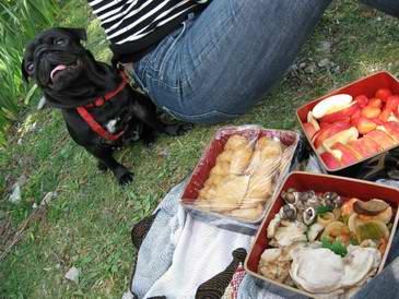 パグ犬とお弁当