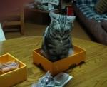 我が家のネコ