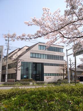 kamogawa_sakura